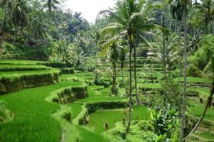 Indonesien – Bali/Lombok
